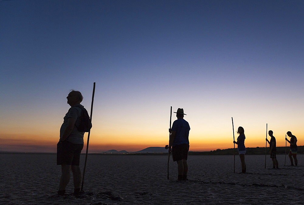 Volunteers at dawn at the Laguna de Fuente de Piedra, waiting for the start of the immature Greater Flamingo (Phoenicopterus roseus) capture event in order to ring them, Malaga province, Andalusia, Spain, Europe