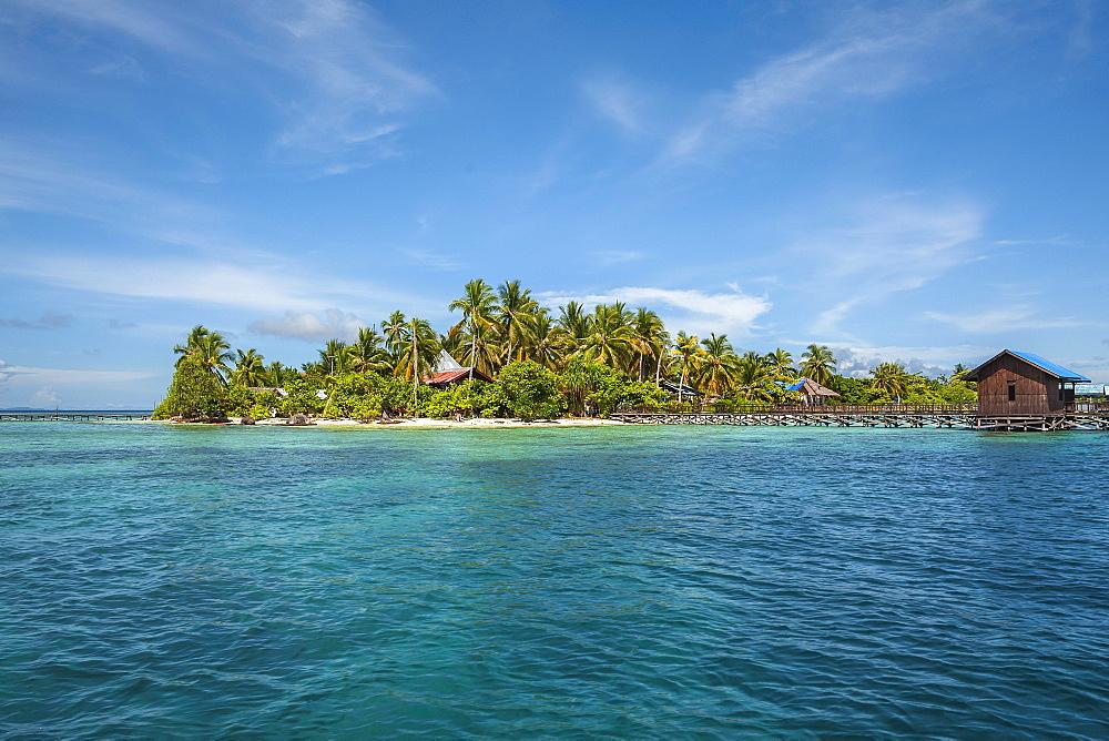 Coconut trees (Cocos nucifera), Arborek Island, Raja-Ampat, Western New Guinea, Indonesia, Asia