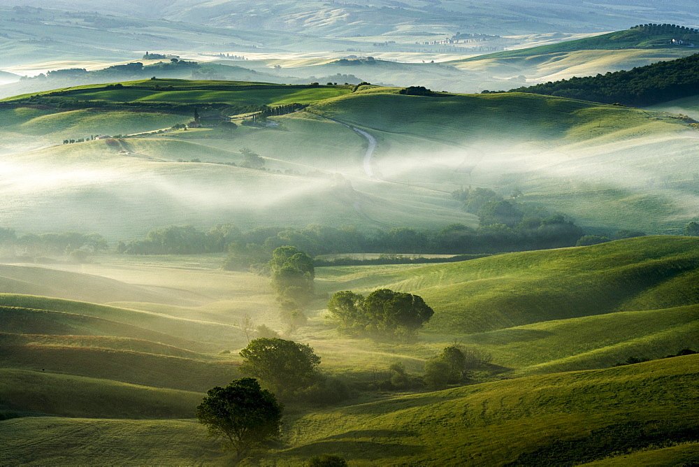 Typical green Tuscan landscape in Val d'Orcia, fields, trees and morning fog at sunrise, San Quirico d'Orcia, Tuscany, Italy, Europe