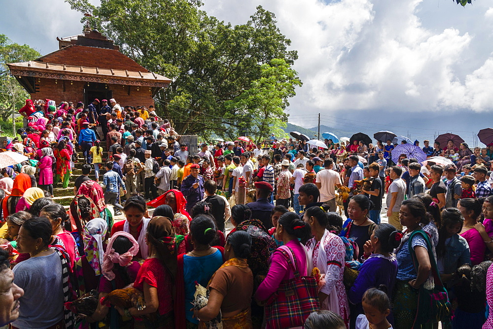 Local people waiting with roosters for sacrifice, The Khadga Devi Mandir Temple, Darsain Hindu Festival, Bandipur, Tanahun, Nepal, Asia