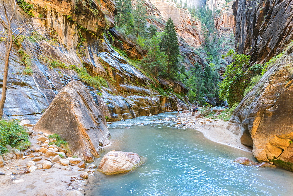 Hikers in river, The Narrows, Virgin River, steep walls, Zion Canyon, Zion National Park, Utah, USA, North America