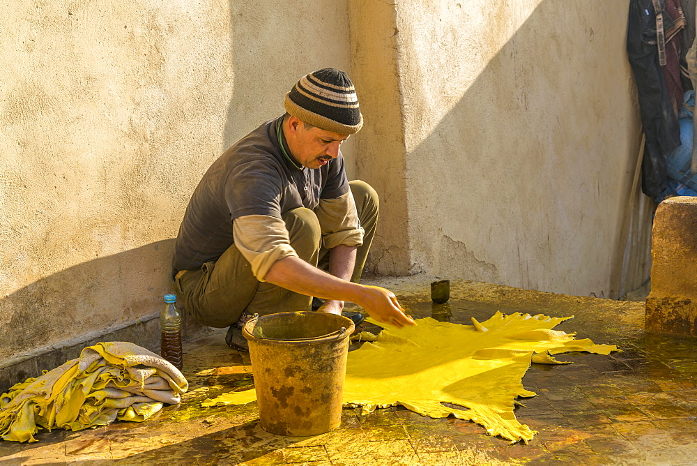 Leather tanners, leather is dyed yellow, dyeing, Tannerie Chouara, tannery- and dye quarter Fes el Bali, Fez, Morocco, Africa