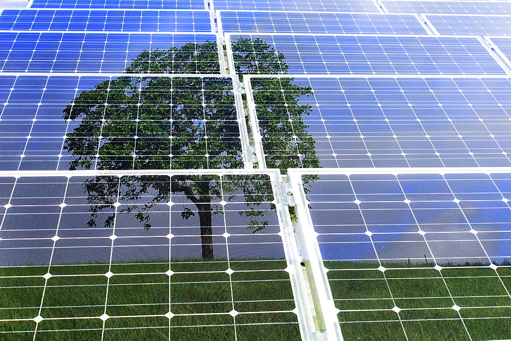 Solar panels with the reflection of a tree, illustration, symbolic image