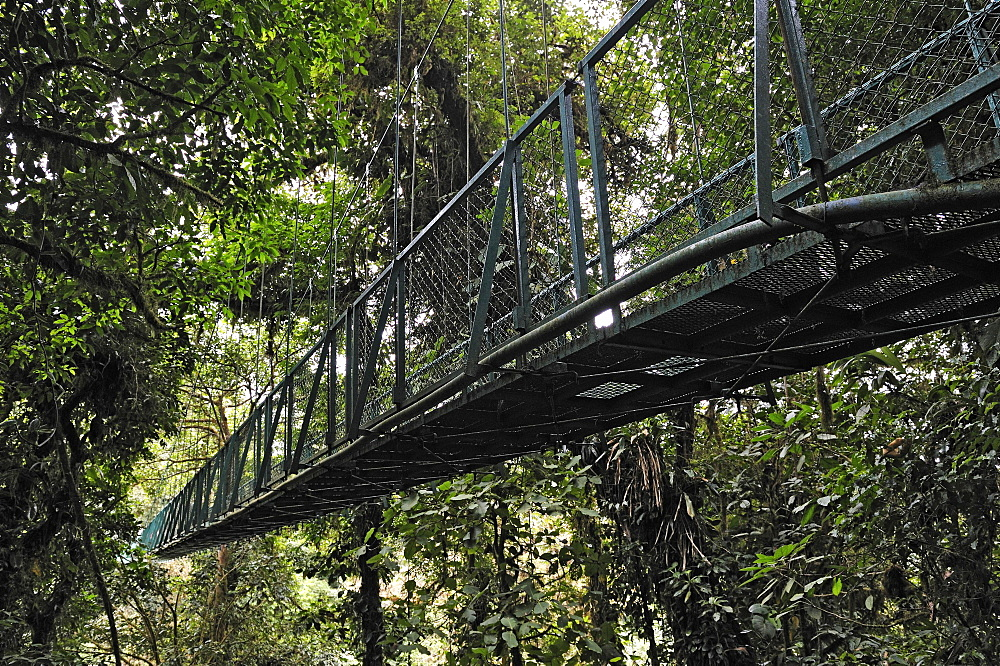 Suspension bridge in a cloud forest, Selvatura Park, Monteverde, province of Alajuela, Costa Rica, Central America