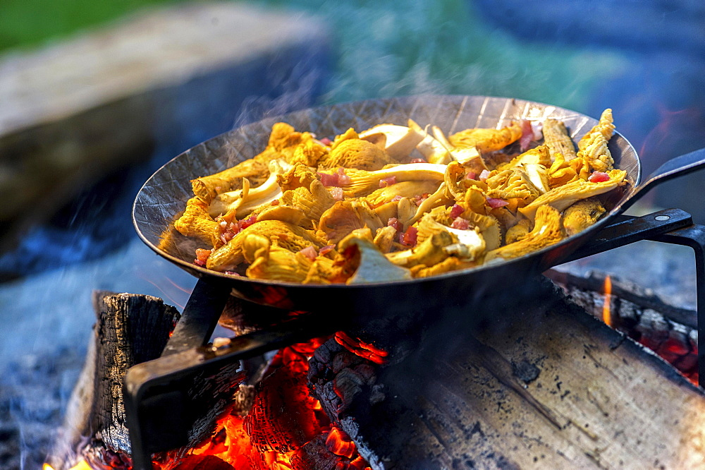 Chanterelles in a pan over an open fire - 832-381578