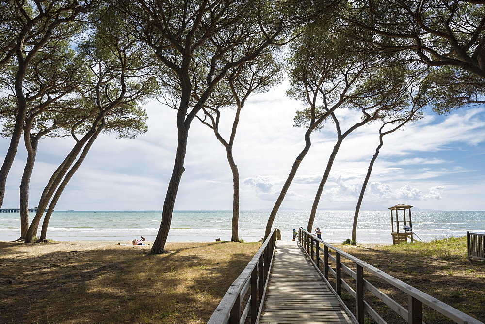 Pines (Pinus pinea) and boardwalk at the beach, Follonica, Livorno Province, Tuscany, Italy, Europe