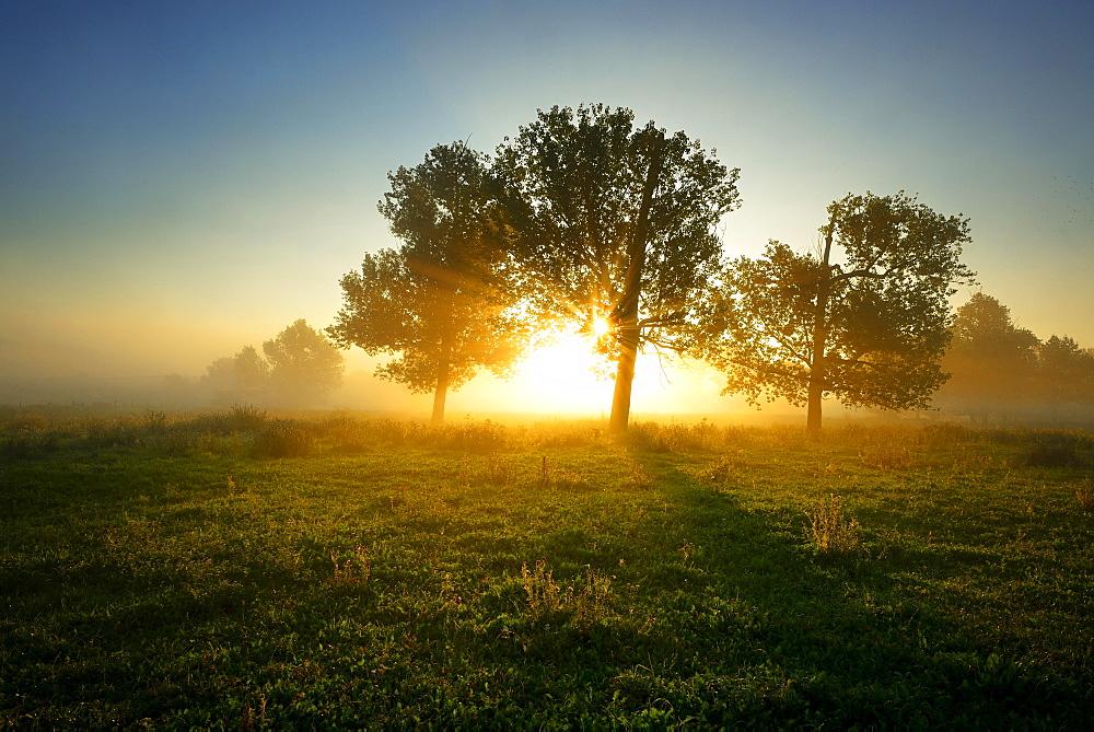 Sun rays shining through trees and fog, Naturpark Unteres Saaletal, Saxony-Anhalt, Germany, Europe