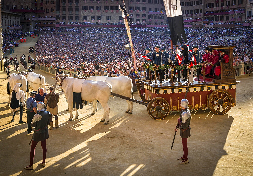 Bull carriage at the historical parade before the Palio di Siena horse race, Siena, Tuscany, Italy, Europe