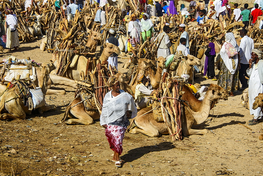 Camels loaded with firewood on the Monday market of Keren, Eritrea, Africa