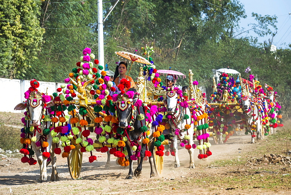 Festively decorated oxen carts, Sagaing, Sagaing Region, Myanmar, Asia