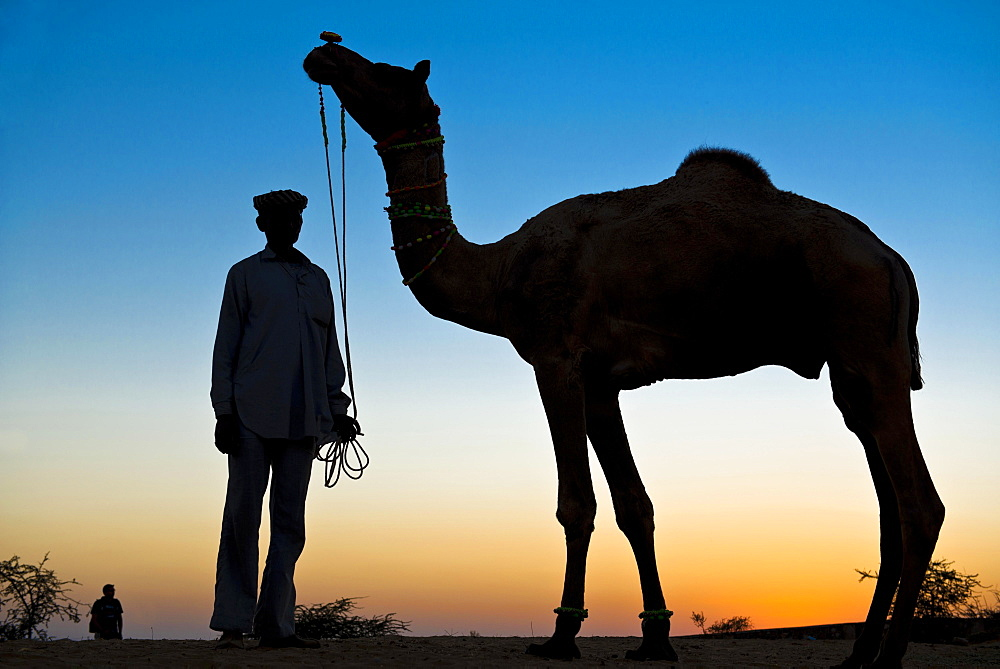 Silhouette of a man holding the reins of his camel, Pushkar Camel Fair, Pushkar, Rajasthan, India, Asia