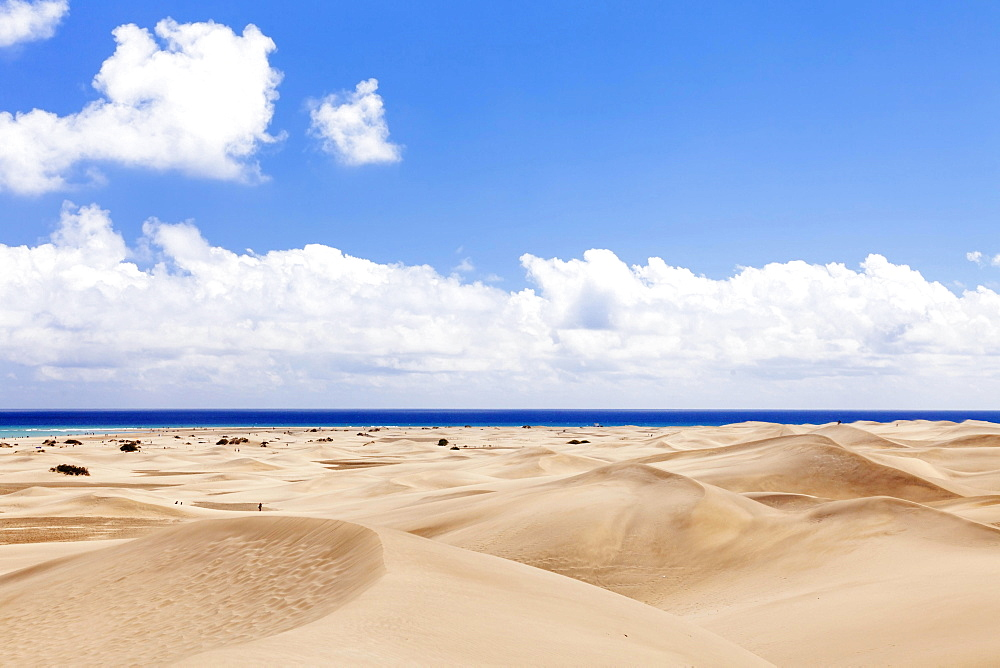 Dunes of Maspalomas, Gran Canaria, Canary Islands, Spain, Europe