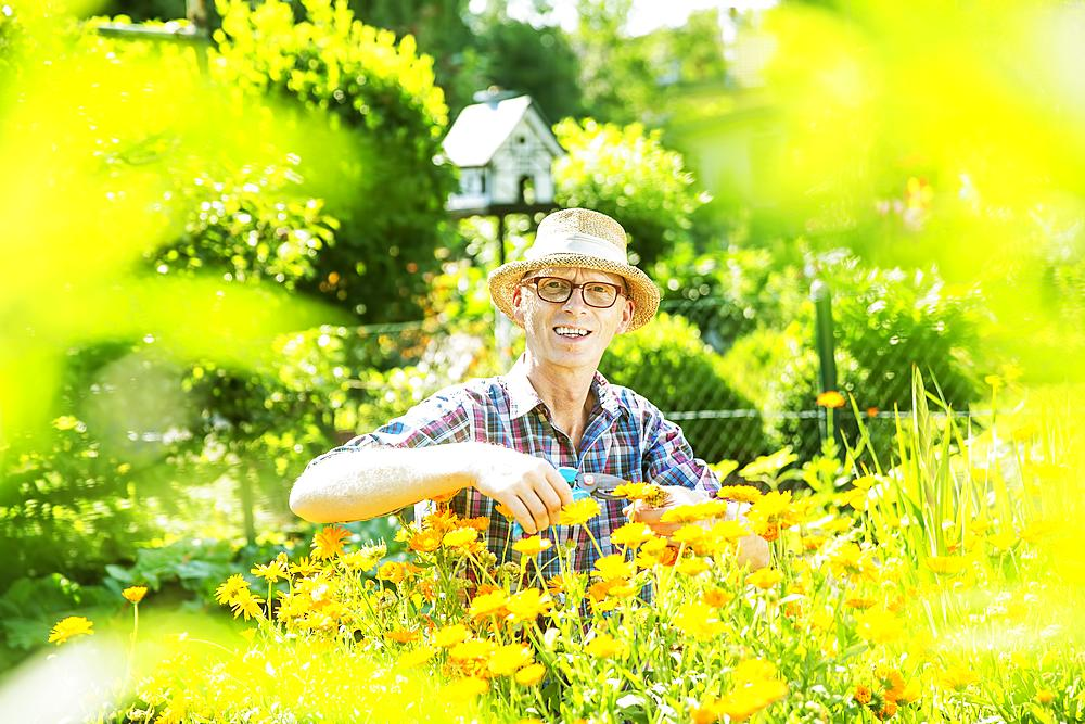 Gardener, garden plot holder, wearing a straw hat, in a flower bed with calendulas, Cologne, North Rhine-Westphalia, Germany, Europe