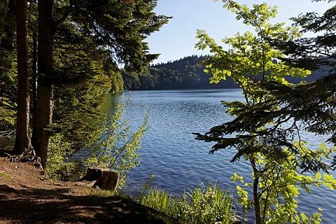 Lac Pavin, Pavin crater lake, Parc naturel regional des Volcans d'Auvergne, Auvergne Volcanoes Regional Nature Park, Puy de Dome, France, Europe