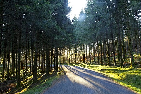 Road in the forest, Monedieres, Parc Naturel Regional de Millevaches, Millevaches Regional Natural Park, Correze, France, Europe