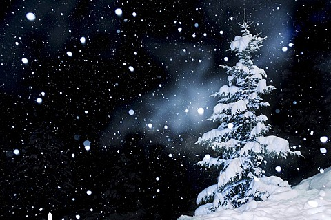 Fir tree with snow and snowflakes