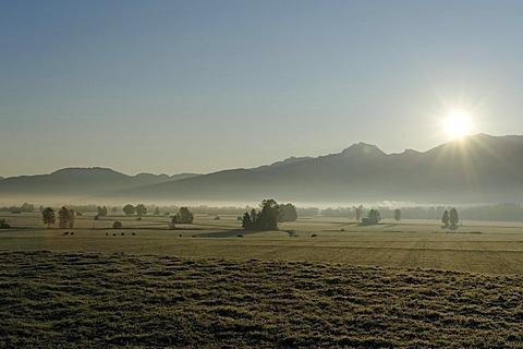 Kochler Moor, moorland near Grossweil, Pfaffenwinkel, Upper Bavaria, Germany, Europe