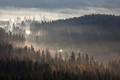 Early morning with autumn mist near Schluchsee Lake, from Riesenbuehl observation tower, Black Forest, Baden-Wuerttemberg, Germany, Europe, PublicGround