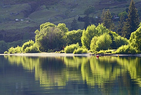 Trees on the shore, reflected in the calm waters of Lake Wanaka, South Island, New Zealand