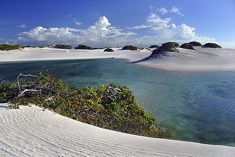 Crystal-clear lagoon in the desert of Lencois Maranhenses, Maranhao, Brazil, South America