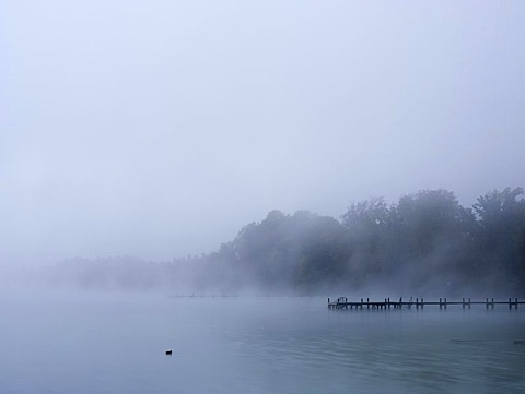Morning fog at Worthsee lake, Bavaria, Germany, Europe