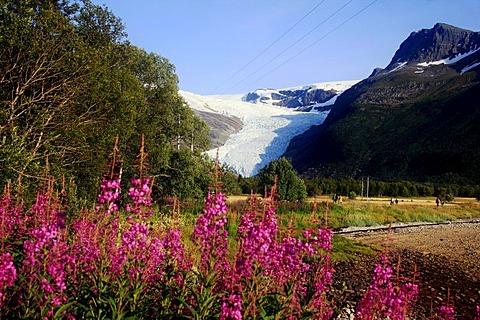 Svartisen glacier, Holandsfjord, Norway, Scandinavia, Europe