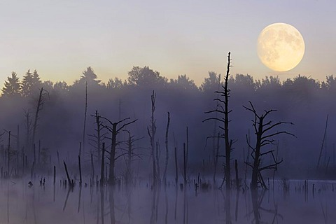 Moon over Schwenninger Moos Nature Reserve, source of the Neckar River, Villingen-Schwenningen, Black Forest, Baden-Wuerttemberg, Germany, Europe, composite image