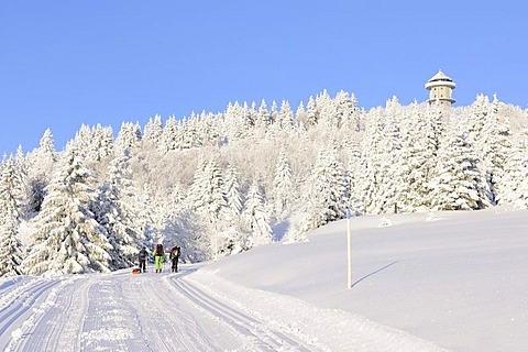Cross country skiers on Feldberg mountain, southern Black Forest, Black Forest, Baden-Wuerttemberg, Germany, Europe