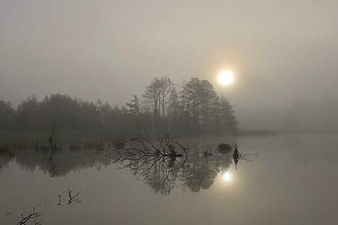 Schwenninger Moos nature reserve in fog, source of the Neckar, Villingen-Schwenningen, Black Forest, Baden-Wuerttemberg, Germany, Europe