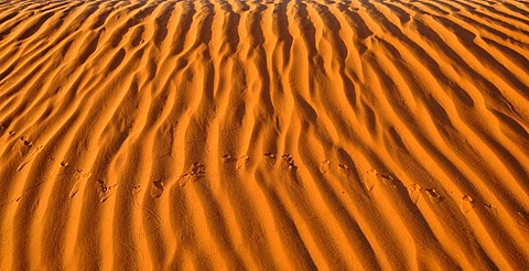 Bird tracks in the sand dunes in front of the Totem Pole and Yei Bi Chei rock formations, Monument Valley, Navajo Tribal Park, Navajo Nation Reservation, Arizona, Utah, United States of America, USA