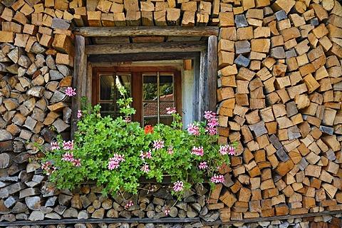 Wood pile built around a window framed by Geraniums (Pelargonium), Bauernhausmuseum Amerang farmhouse museum, Amerang, Bavaria, Germany, Europe