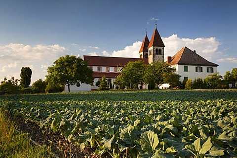 Church of St. Peter and Paul at Niederzell on the island of Reichenau, Lake Constance, Konstanz district, Baden-Wuerttemberg, Germany, Europe, PublicGround