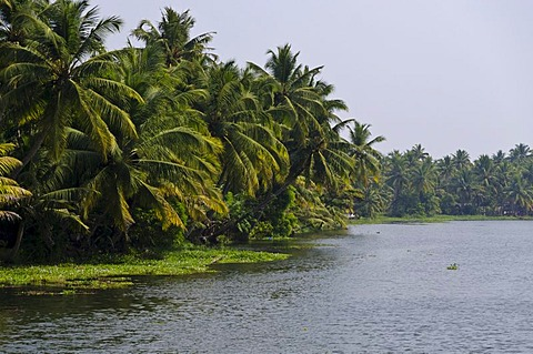 The landscape of the backwaters in Kerala, India, Asia