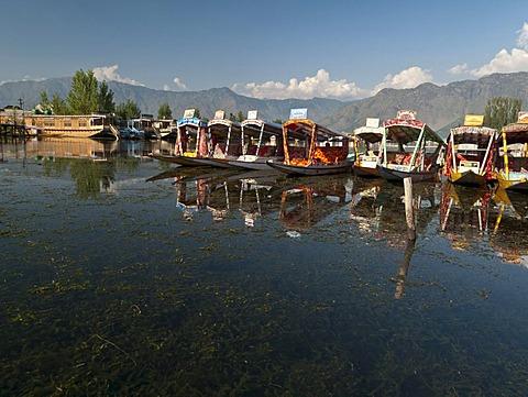Houseboats on Dal Lake, popular to accomodate tourists in Srinagar, Jammu and Kashmir, India, Asia - 832-61944