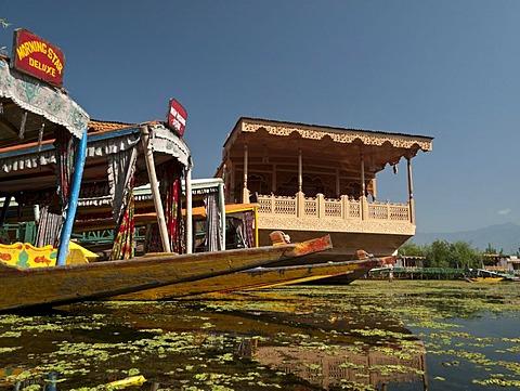 Houseboats on Dal Lake, popular to accomodate tourists in Srinagar, Jammu and Kashmir, India, Asia - 832-61945