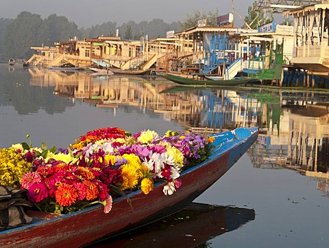 Flowers are sold from a Shikara, traditional boat on Dal Lake, Srinagar, Jammu and Kashmir, India, Asia - 832-61954