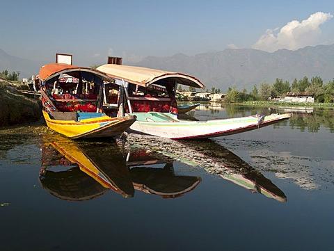 Shikaras, traditional boats on Dal Lake, Srinagar, Jammu and Kashmir, India, Asia - 832-61955