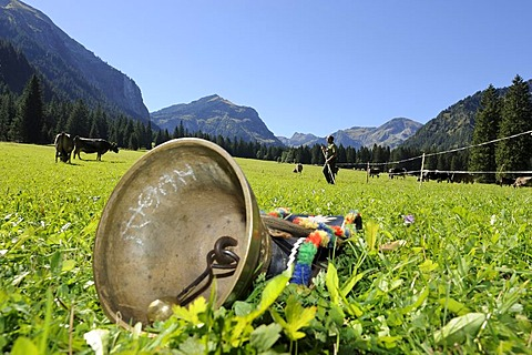 Cowbell to decorate the cows lying readily on a meadow, Almabtrieb, where the cattle are led back from their alpine pasture, Tannheim, Tannheimer Valley, Tyrol, Austria, Europe