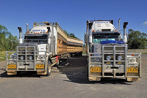 Road trains for transporting livestock, Moura, Great Dawson Highway, Queensland, Australia