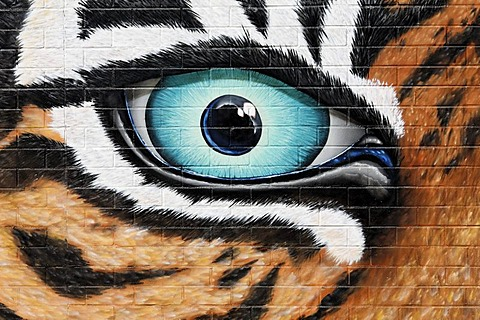 Threatening tiger eyes, graffiti on the wall of the Cologne Zoo, Cologne, North Rhine-Westphalia, Germany, Europe