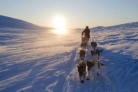 Dog sledding in Norway, Finnmarksvidda, Finnmark, Lapland, Norway, Europe