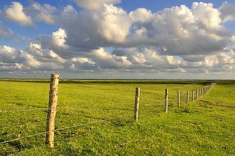 Fence in the floodplains of Neufelder Koog, polder, Elbe estuary, North Sea coast, Schleswig-Holstein Wadden Sea National Park, Dithmarschen region, Schleswig-Holstein, Germany, Europe