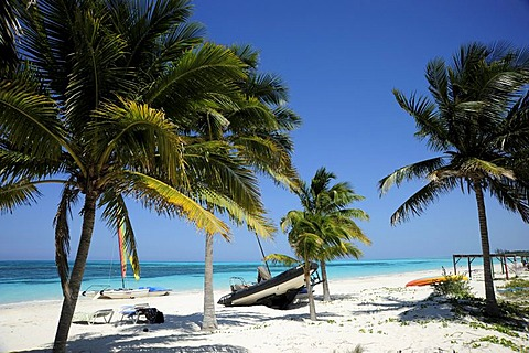 Beach with palm trees, Cayo Levisa island, Pinar del Rio province, Cuba, Greater Antilles, Gulf of Mexico, Caribbean, Central America, America