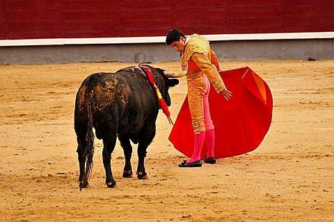 Bullfighter, matador, with a scarlet cape, muleta, and sword, estoque, in Las Ventas Bullring, Madrid, Spain, Iberian Peninsula, Europe