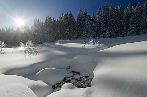 Snow-covered clearing with sun and blue sky, in the morning, Black Forest, Baden-Wuerttemberg, Germany, Europe