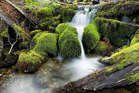 Stream in Tierra del Fuego, Argentina, South America