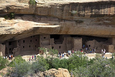 Visitors tour the Spruce Tree House cliff dwelling at Mesa Verde National Park, featuring cliff dwellings of ancestral Puebloans that are nearly a thousand years old, Cortez, Colorado, USA