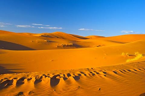 Sand dunes of Erg Chebbi, Sahara, southern Morocco, Morocco, Africa