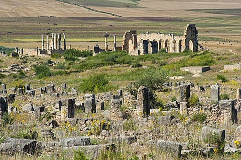 Roman ruins with the basilica, ancient city of Volubilis, UNESCO World Heritage Site, Morocco, North Africa, Africa