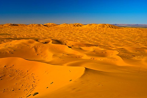 Sand dunes of Erg Chebbi in the evening light, southern Morocco, Morocco, Africa
